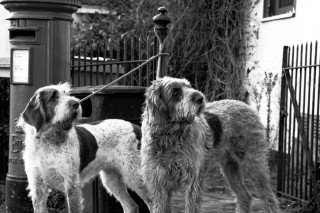 Hounds Sutton Valence