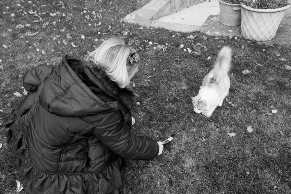 Young girls entices kitten with a feather